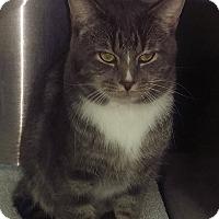 Adopt A Pet :: Tobias - Edmonton, AB