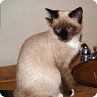 Adopt A Pet :: K-Sabrina1-Apollo - Colorado Springs, CO