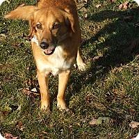 Adopt A Pet :: Shelby - Upper Sandusky, OH