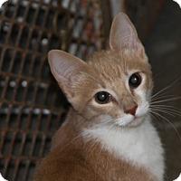 Adopt A Pet :: Julius - Sylvania, GA