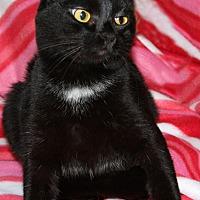 Adopt A Pet :: Link - Torrance, CA