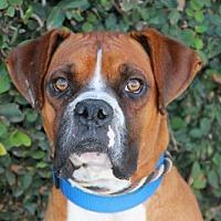 Adopt A Pet :: Elvis - Fremont, CA