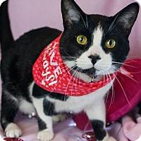 Adopt A Pet :: Manny - Muskegon, MI