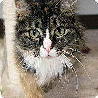 Adopt A Pet :: Bernice - Paris, ME