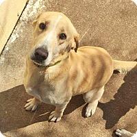 Adopt A Pet :: Charlie - Kingston, TN