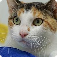 Adopt A Pet :: Blossom - Englewood, FL