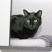 Adopt A Pet :: Paul - Stamford, CT