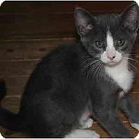 Adopt A Pet :: Dorian - Davis, CA