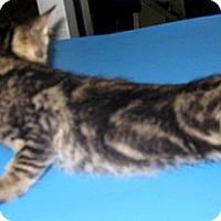 Adopt A Pet :: China - Dallas, TX