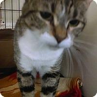 Adopt A Pet :: Henna - Centralia, WA