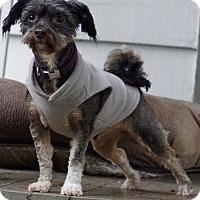 Adopt A Pet :: Toby - Salem, OR