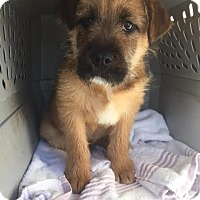 Adopt A Pet :: PADDY - Bordentown, NJ - New Jersey, NJ
