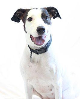 Mixed Breed (Medium) Mix Dog for adoption in Bradenton, Florida - Ella