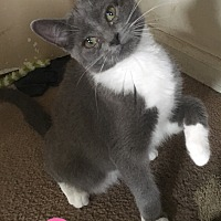 Adopt A Pet :: Emma - Cheney, KS