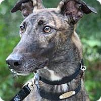 Adopt A Pet :: Tyrone - Nashville, TN