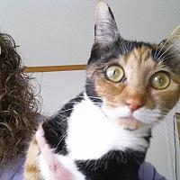Adopt A Pet :: Nadia - Waynesville, NC