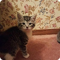 Adopt A Pet :: Maribel - Whitewater, WI