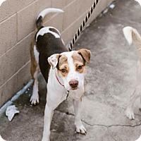 Adopt A Pet :: Aspen - Chino Hills - Chino Hills, CA