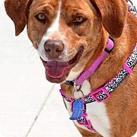Adopt A Pet :: Linley - Albemarle, NC