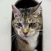 Adopt A Pet :: Triscuit - Elyria, OH