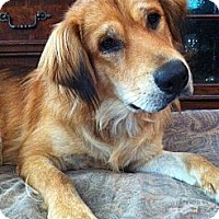 Adopt A Pet :: AWESOME Caden - Windham, NH