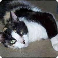 Adopt A Pet :: Licorice - Davis, CA