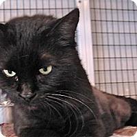 Adopt A Pet :: Samantha - Deerfield Beach, FL
