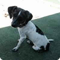Adopt A Pet :: KAMMIE - Atascadero, CA