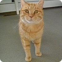 Adopt A Pet :: Trigger - Hamburg, NY