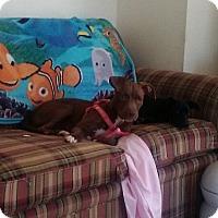 Adopt A Pet :: Winnie - North Brunswick, NJ