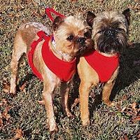 Adopt A Pet :: MILEY & LEVI: Kansas City area - Overland, KS