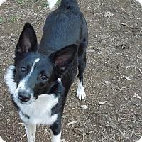 Adopt A Pet :: Verity - Harrisburg, PA