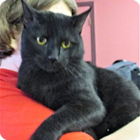 Adopt A Pet :: Kennedy - Reeds Spring, MO