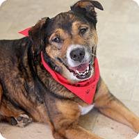 Adopt A Pet :: Molly - Dalton, GA