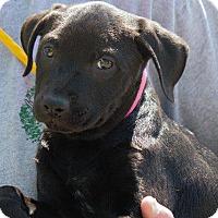 Adopt A Pet :: Cabbage - Columbus, GA