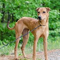 Adopt A Pet :: Millie - Winder, GA