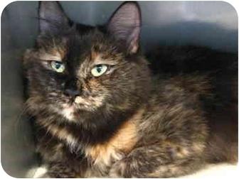 Domestic Mediumhair Cat for adoption in Markham, Ontario - Heather
