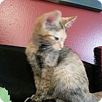 Adopt A Pet :: Spice - Clearfield, UT