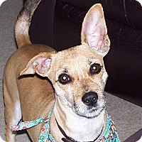 Adopt A Pet :: Ruby - Tipp City, OH