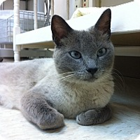 Adopt A Pet :: Kortneiy - Trevose, PA