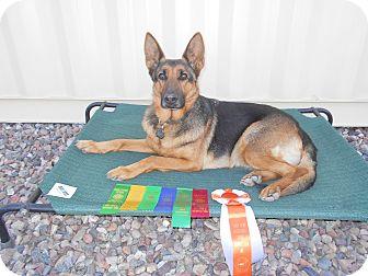 German Shepherd Dog Dog for adoption in Phoenix, Arizona - TRAINED COMPANION DOG