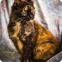 Adopt A Pet :: VFW - Anna, IL