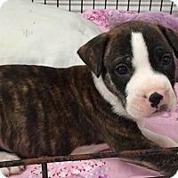 Adopt A Pet :: Ragnar - Windermere, FL