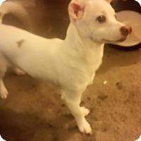 Adopt A Pet :: River - Iowa, Illinois and Wisconsin, IA