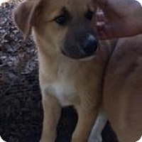 Adopt A Pet :: Quinn - Quinlan, TX