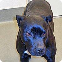 Adopt A Pet :: Reno - Wildomar, CA