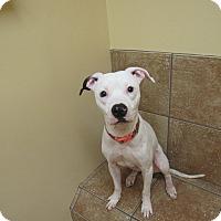 Adopt A Pet :: Minnie Poo - Appleton, WI