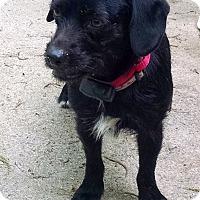 Adopt A Pet :: Trooper - Franklinton, NC