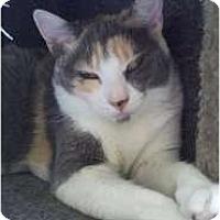 Adopt A Pet :: Sage - Richboro, PA