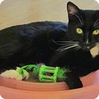 Adopt A Pet :: Gina - Prescott, AZ